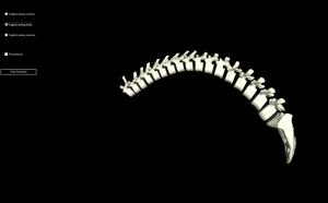 FysioCentrum Rugfit